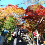 Fall-Colors-in-Kyoto