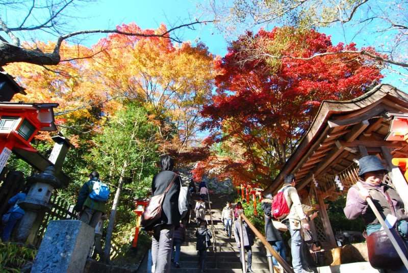 Fall Colors in Kyoto