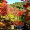 Garden-at-Eikando-Shrine-in-Kyoto