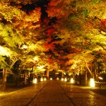 Light-up-of-fall-colors-at-Eikando-Temple-Kyoto