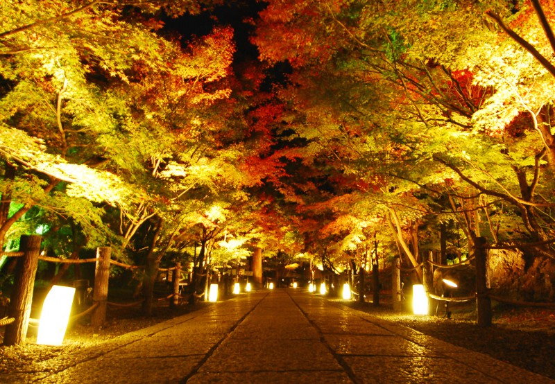 Light up of fall colors at Eikando Temple, Kyoto