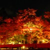 Light-up-of-fall-colors-at-Eikando-Temple-Kyoto2