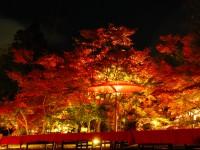 Light-up-of-fall-colors-at-Eikando-Temple-Kyoto2