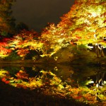 Light-up-of-fall-colors-at-Kodaiji-Temple-Kyoto