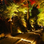 Light-up-of-fall-colors-at-Kodaiji-Temple-Kyoto2