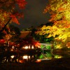 Light-up-of-fall-colors-at-Kodaiji-Temple-Kyoto3