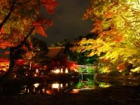 Light-up-of-fall-colors-at-Kodaiji-Temple-Kyoto3