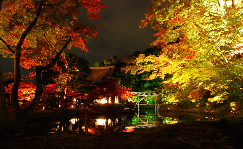Light up of fall colors at Kodaiji Temple, Kyoto