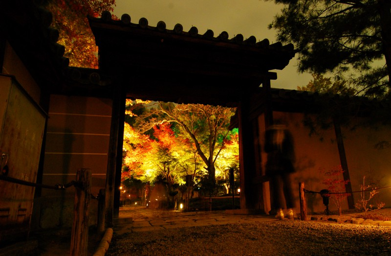 Light up of fall colors at Kodaiji Temple, Kyoto