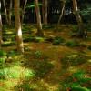 Moss-Garden-in-Kyoto