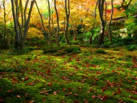 Moss-Garden-in-Kyoto2