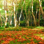 Moss-Garden-in-Kyoto3