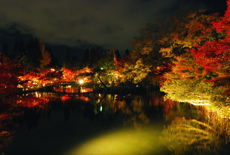03_美しい紅葉と共に、眩しい光源が目に入ってしまう