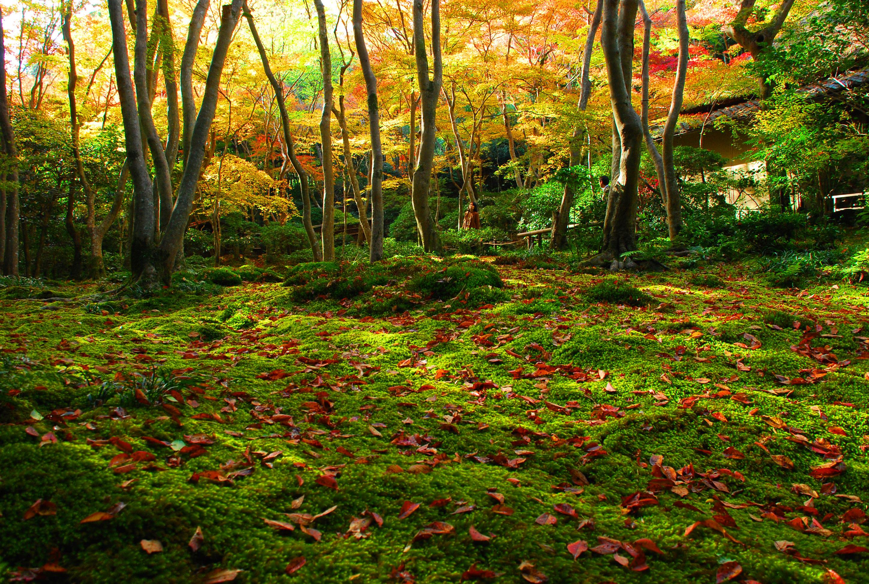 05_淡い紅葉と苔の色のコントラストが自然光の美しさを感じさせる