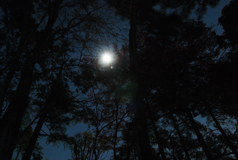 19_夜が暗い京都では月や星のかすかな光にも安心感を抱く