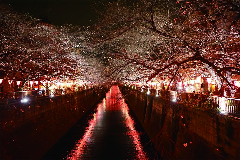 20190329_Meguro River-2